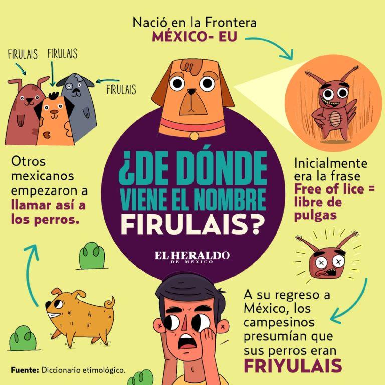 Cual Es El Verdadero Origen Del Nombre Firulais Y Que Significa En Realidad El Heraldo De Mexico