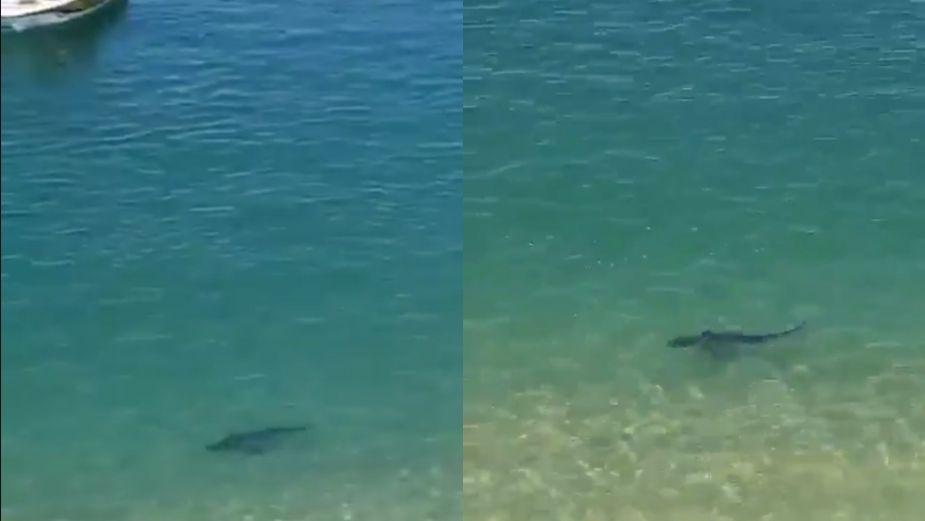 ¡Cuidado! Tiburón sorprende y pone en alerta a bañistas de Puerto Marqués en Acapulco