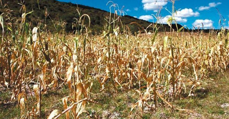 Sequías en campo