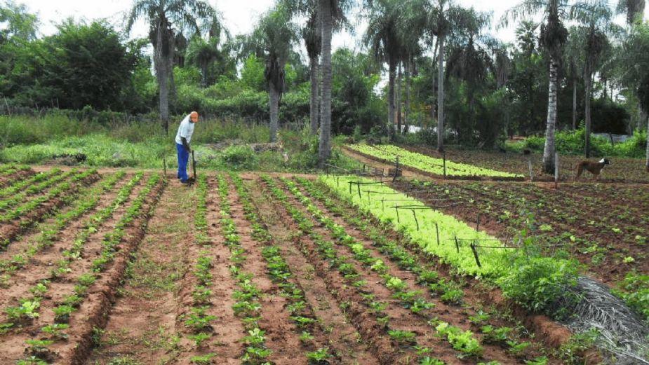 Agricultores no paran actividades en Tamaulipas pese a contagios de Covid-19
