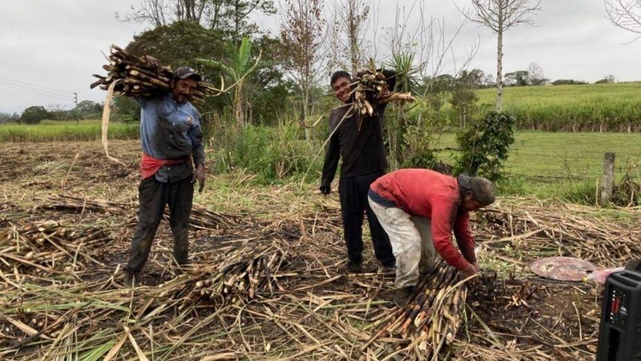 Endulzan dura jornada laboral durante la Zafra Veracruzana