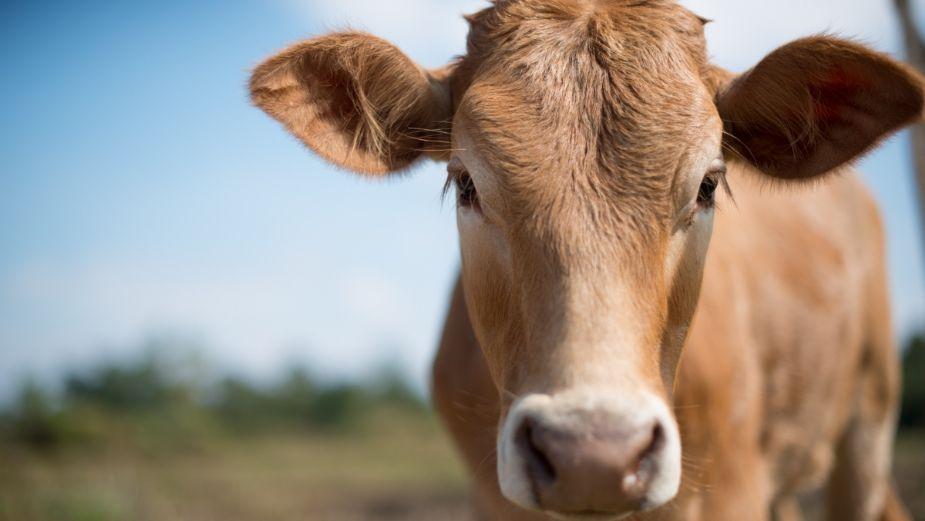 La intensa sequía dejó mortandad de ganado en Tamaulipas