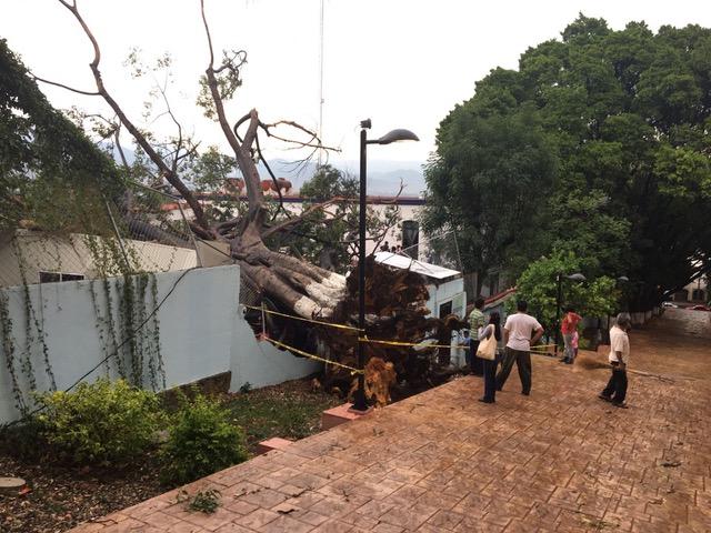 FOTOS: Una tromba derriba árboles y techos en Oaxaca