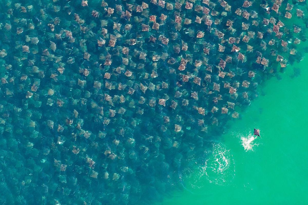 FOTOS: Concurso CIWEM, 10 años del impacto humano sobre el planeta