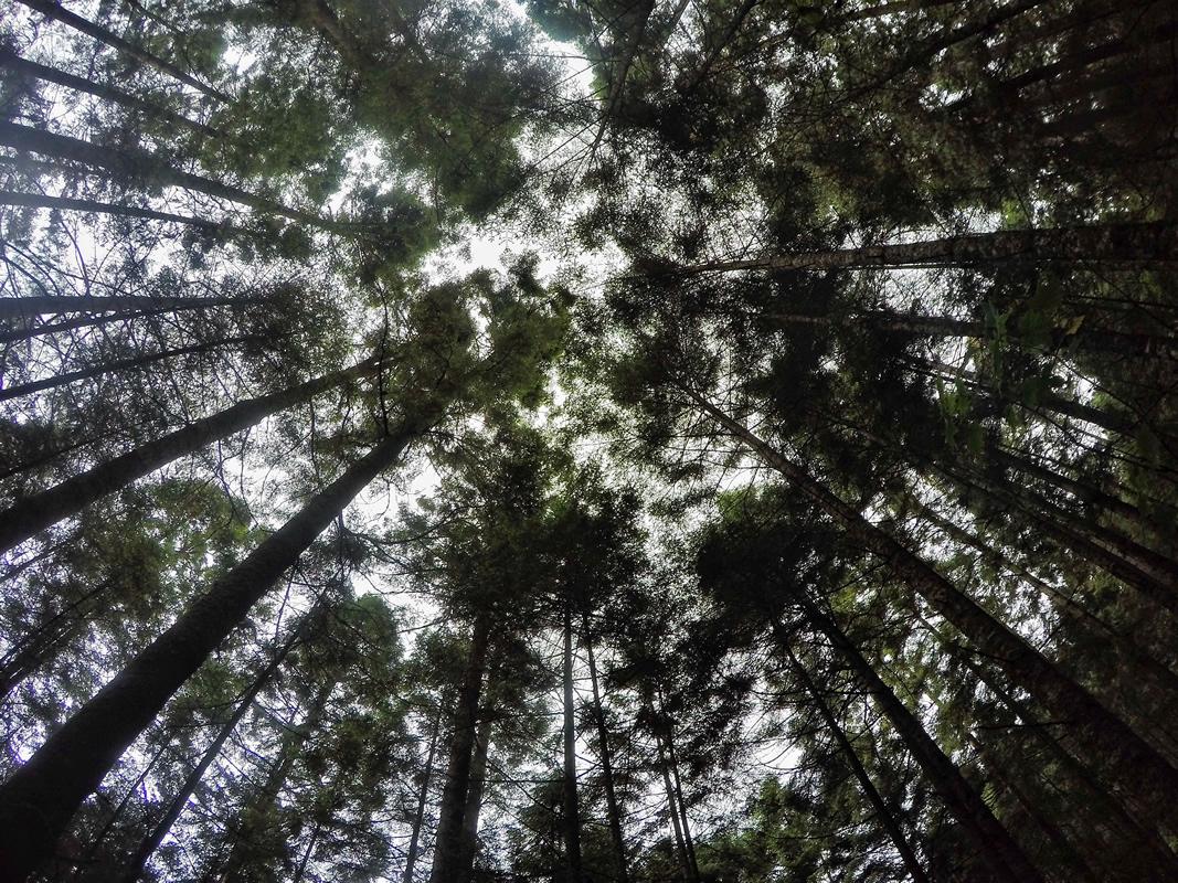 Árboles. Foto: Cuartoscuro