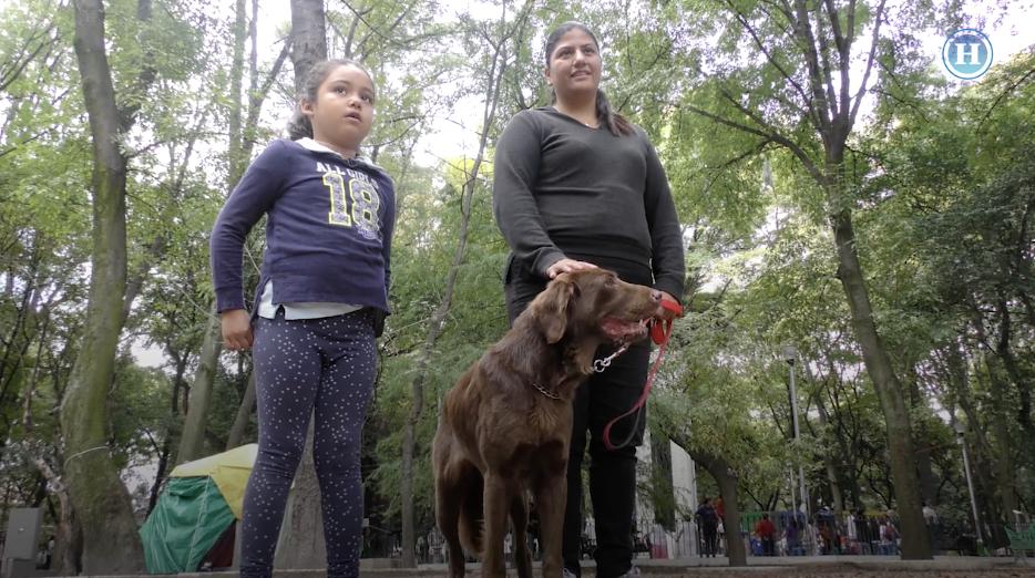 Rescatan a perros perdidos en el sismo