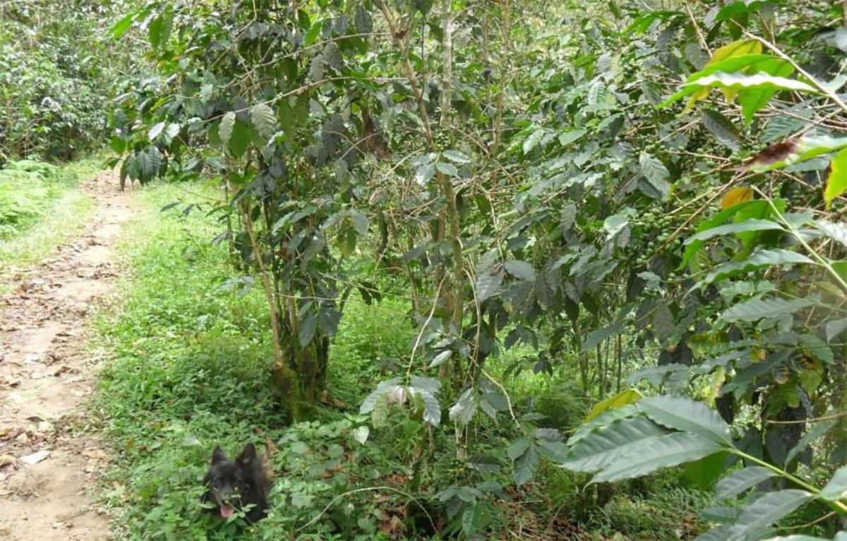Sismo. En Chiapas suspenden paseos en el Cañón del Sumidero