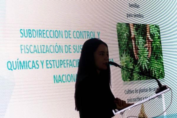 La reforma a la Ley General de Salud permite el cultivo y siembra. Foto: CUARTOSCURO