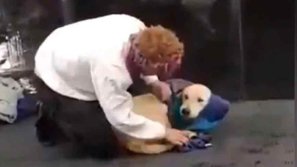 En la imagen el momento en que este hombre abriga al singular perrito